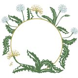 Floral decorative card with dandelion and place for your text, vector image royalty free illustration