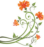 Floral design. With orange flowers Royalty Free Stock Photo