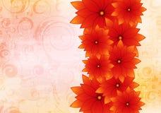 Floral design background Stock Photos