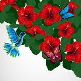 Floral design background. Hibiscus flowers with bird, butterflie. S. Vector Stock Illustration