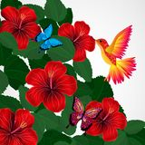 Floral design background. Hibiscus flowers with bird, butterflie. S. Vector Vector Illustration