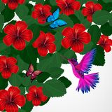 Floral design background. Hibiscus flowers with bird, butterflie. S. Vector Royalty Free Illustration
