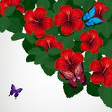 Floral design background. Hibiscus flowers with butterflies. Vector stock illustration