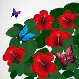 Floral design background. Hibiscus flowers with butterflies. Vector royalty free illustration