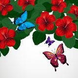 Floral design background. Hibiscus flowers with butterflies. Vector Vector Illustration