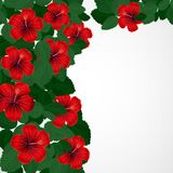 Floral design background. Hibiscus flowers. Vector Royalty Free Illustration
