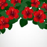 Floral design background. Hibiscus flowers. Vector Stock Image