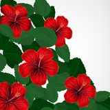 Floral design background. Hibiscus flowers. Vector Stock Illustration