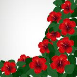 Floral design background. Hibiscus flowers. Vector Vector Illustration