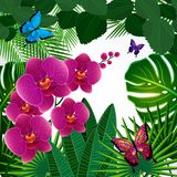 Floral design background. Orchid flowers with butterflies. Vector royalty free illustration