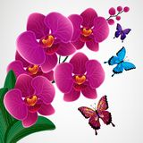 Floral design background. Orchid flowers with butterflies. Vector vector illustration