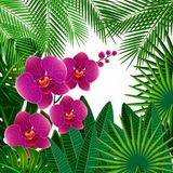Floral design background. Orchid flowers. Vector royalty free illustration