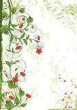 Floral design card. For designer. Red flower and green leaf Royalty Free Illustration