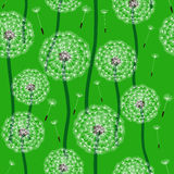 Floral design. Dandelion Stock Images