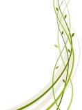 Floral design element. Vector design element. green waves Stock Images