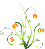 Floral design element .  Stock Photography