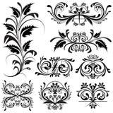 Floral Design Element Stock Image