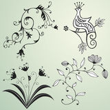 Floral design elements. Set of floral design elements and a bird of paradise Stock Photography