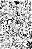 Floral design elements Royalty Free Stock Image
