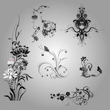 Floral design elements and background Royalty Free Stock Photos