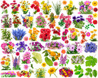 Floral design elements. Big set of the isolated floral design elements for collages. All full size images you  find in my portfolio Royalty Free Stock Photo