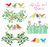 Floral design elements and birds set Royalty Free Stock Image