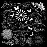 Floral design elements black background Stock Photo