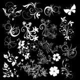 Floral design elements black background Stock Image
