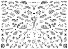 Floral design elements for Valentine`s Day. Hand sketched floral design elements for Valentine`s Day or weddings, flowers and leaves for text decoration Royalty Free Stock Images