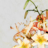 Floral design, imitation pencil drawings, lilies Royalty Free Stock Photography
