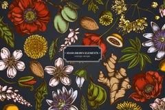 Free Floral Design On Dark Background With Almond, Dandelion, Ginger, Poppy Flower, Passion Flower, Tilia Cordata Stock Photos - 151884973