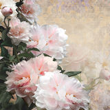 Floral design peonies pastel color background Royalty Free Stock Photo