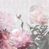 Floral design peonies Stock Image