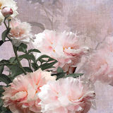 Floral design peonies, pastel color background Stock Photos