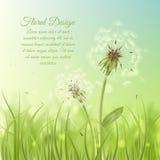 Floral design poster of dandelion Stock Image
