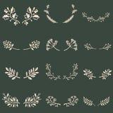 Floral design. Set of decorative botanical decorative elements vector illustration