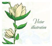 Floral design template. Watercolor hand drawn. Flower. Vector illustration. This is file of EPS10 format Royalty Free Stock Photography