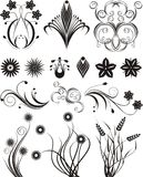 Floral design, vector. Graphics, vector, black, flower and plant elements, vector illustration Royalty Free Stock Photo