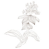 Floral design, vector illustration. Flower in the contours royalty free illustration
