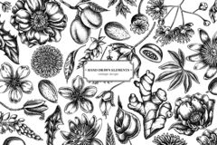 Free Floral Design With Black And White Almond, Dandelion, Ginger, Poppy Flower, Passion Flower, Tilia Cordata Stock Images - 151801864