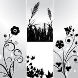 Floral designs Stock Image