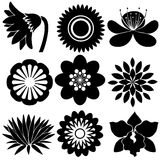 Floral designs in black colors Royalty Free Stock Photography