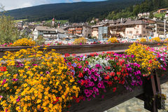 Floral display in Ortisei Royalty Free Stock Images