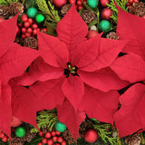 Floral Display. Poinsettia flower  display forming an abstract background Royalty Free Stock Photos