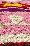 Floral Display, Valletta, Malta Stock Photo
