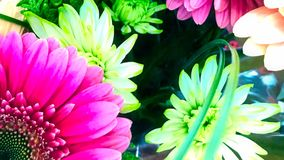 Floral Display, Youtube Channel Art Banner. 2560 x 1440 , Close up Floral Subject royalty free stock image