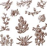 Floral doodles Stock Image