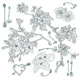 Floral drawing, vector illustration. Line drawing on white background, flowers and Cupid`s arrows Stock Image