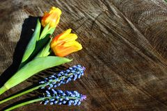 Floral easter greetings royalty free stock images
