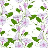 Floral elegant background convolvulus. seamless tender pattern flower bindweed. Morning-glory endless feminine ornament. Illustration vector illustration